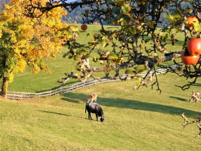 Südtirol-Okt-2008 159 (3)