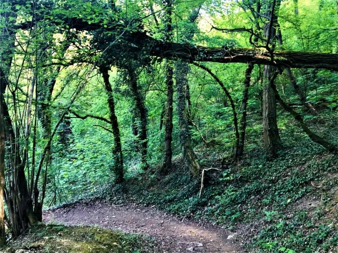 Wald2 (2)